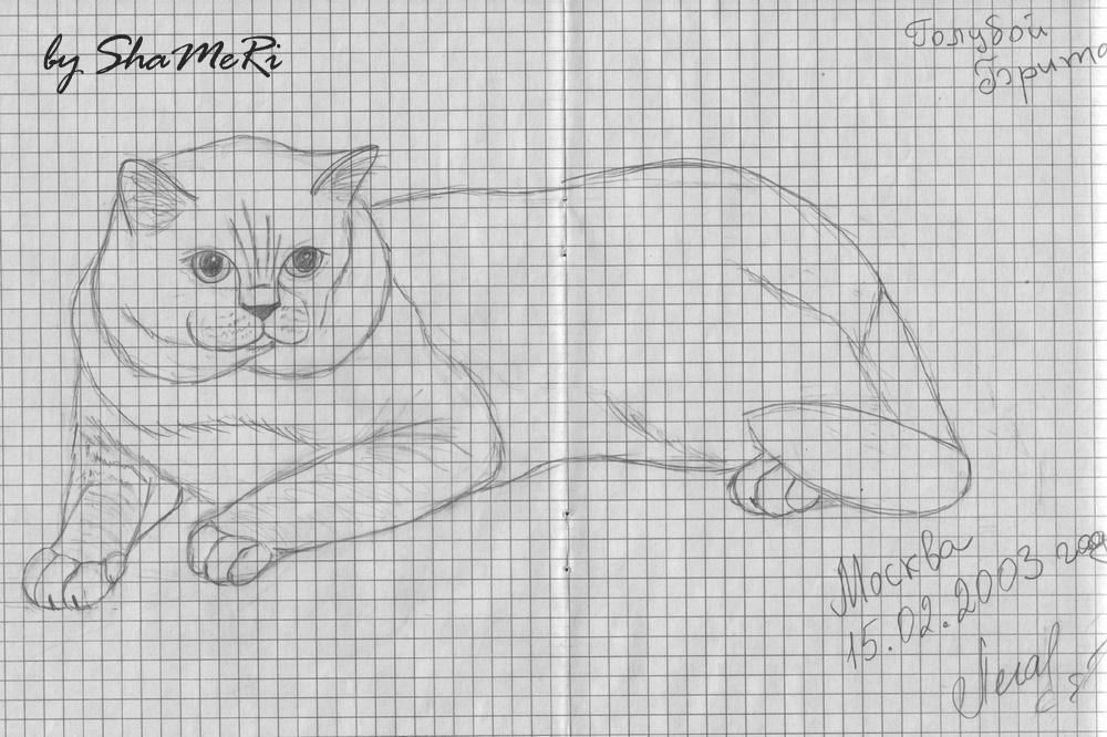 Легкие рисунки простым карандашом кота